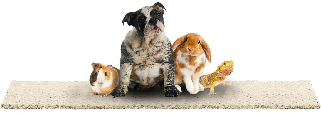 Risultati immagini per pets carpet