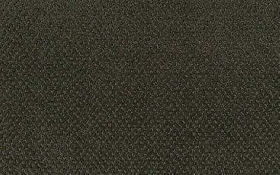 Northern Spruce