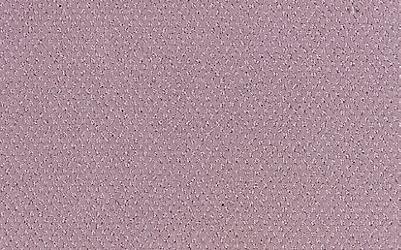 Baby Lavender