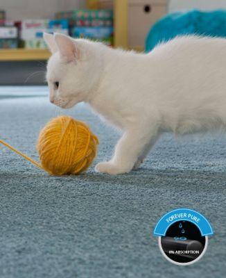 Smart Strand Cat