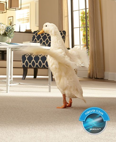 Rugs That Dog Hair Won T Stick To: SmartStrand Stain Resistant Carpet, Stain Proof Carpet